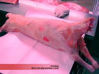 Cómo preparar y cortar carnes: el cordero