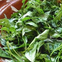 Quelites: las plantas comestibles que han revivido la culinaria tradicional mexicana