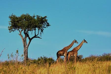 Wildlife 1536582 1280