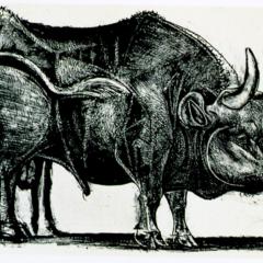 Foto 3 de 11 de la galería toro-de-picasso en Applesfera