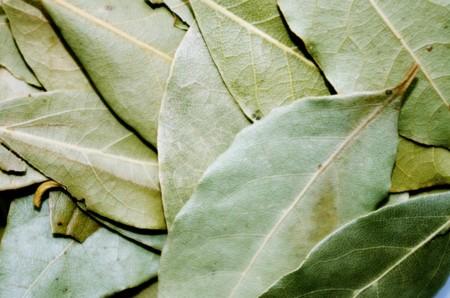 Bay Leaf 1049543 1280