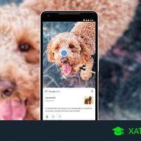 Nuevo Google Lens: así puedes identificar objetos y textos directamente con la cámara  de tu móvil