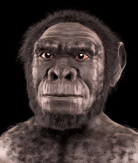 Homo Habilis Forensic Facial Reconstruction
