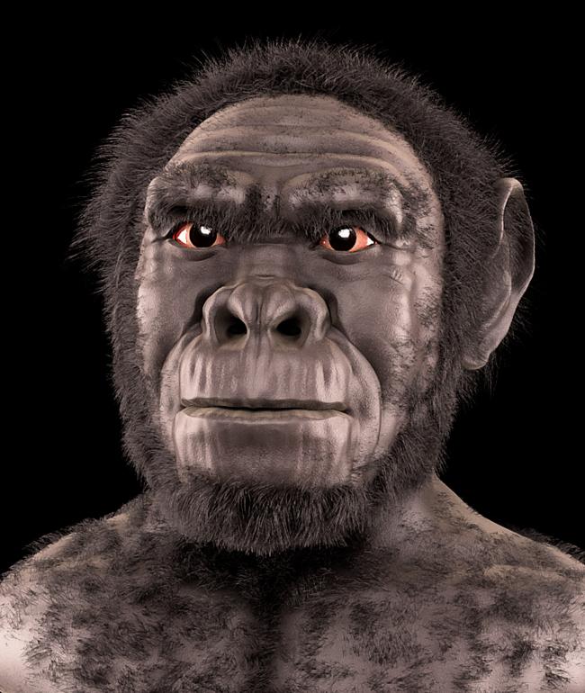 Homo Habilis Forensic Facial Reconstruction