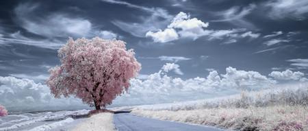 'Infrascapes', un timelapse en resolución 8K que nos enseña lo bella que puede ser la naturaleza en fotografía infrarroja