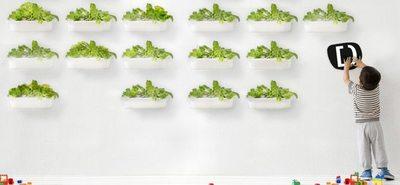 Hidroponía, para que tus plantas crezcan felices