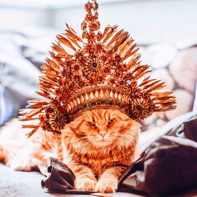 Ginger Cat Photography Kotleta Cutlet Kristina Makeeva Hobopeeba 17