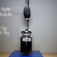 Este músculo blando sintético que emula al humano se podrá usar el robots