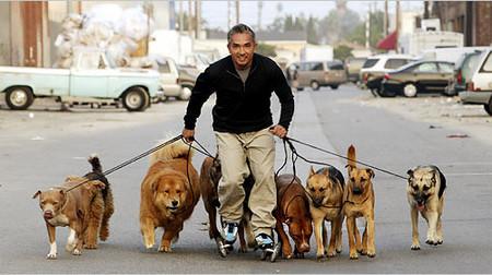El éxito de 'El encantador de perros' crea escuela