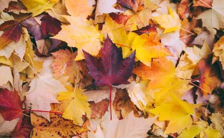 Los siete trastornos de la salud más frecuentes en otoño