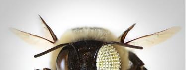 Una cámara que te mira como un insecto