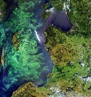 Aumentan las zonas marinas muertas