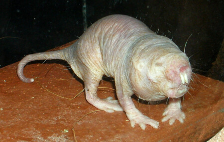 Ratatopo