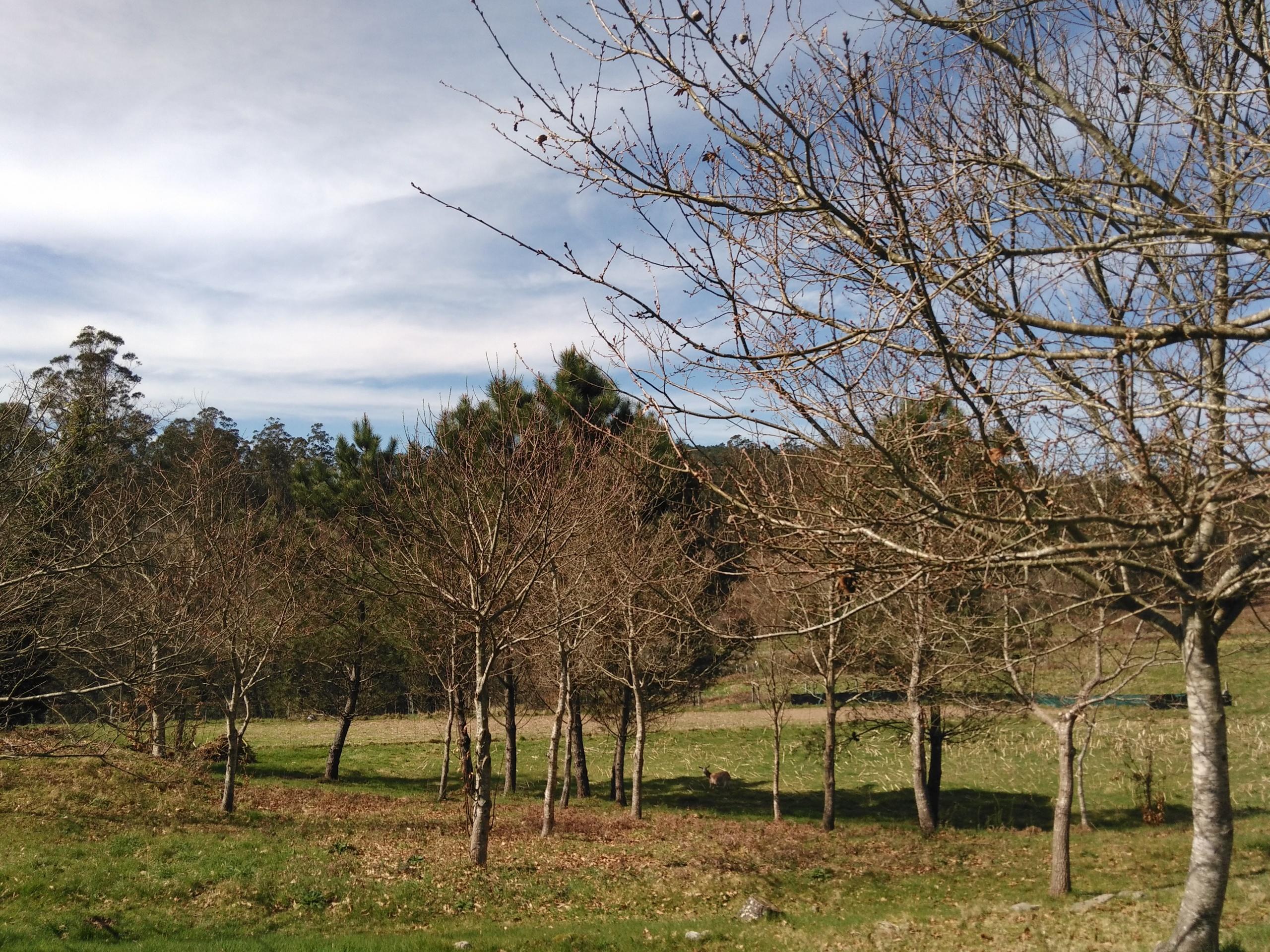 Foto de Wiko Ridge 4G, cámara (13/19)