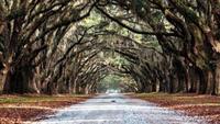 Savannah: el que dicen que es el pueblo más bonito de Estados Unidos