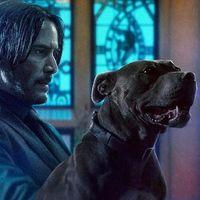'John Wick 5' confirmada: Keanu Reeves rodará las dos siguientes entregas de la saga de forma consecutiva
