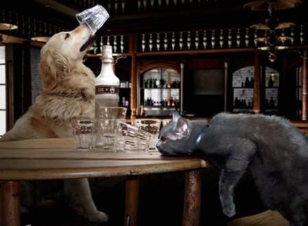 Animales embriagados