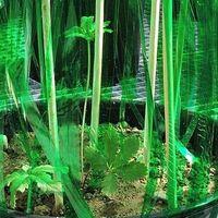 Las plantas toman decisiones estratégicas en función de la competencia