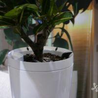 Si eres de los que se olvida de regar las plantas, Parrot tiene dos accesorios para ti
