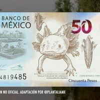 El ajolote sí aparecerá en los billetes de 50 pesos de México, pero esta imagen es totalmente falsa