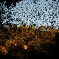 El misterio de los murciélagos de Lloviu, el ébola y las pandemias del futuro