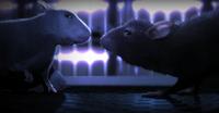 'One rat short', amor animal en tiempos modernos
