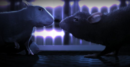 'One rat short', amor animal en tiempos modernos