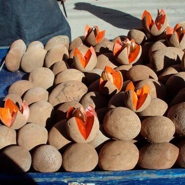 Mamey: una fruta 100% mexicana que tiene múltiples beneficios para nuestra salud