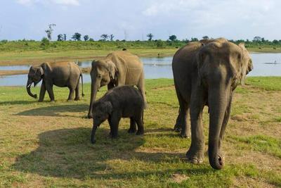 Observando elefantes muy de cerca en Udawalawe, Sri Lanka
