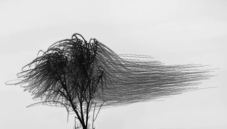 Ornitography Xavi Bou 5
