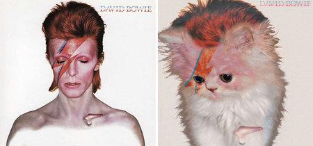 Alguien tuvo la genialidad de remplazar con gatitos a los humanos de las portadas de álbumes legendarios