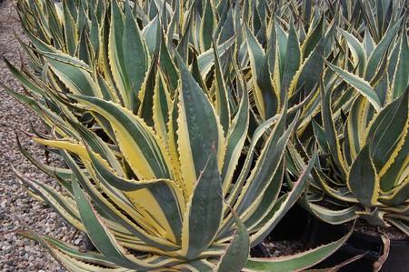 La tendencia de plantas exóticas es un problema: más alergias, menos biodiversidad y más erosión