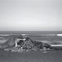 Richard Learoyd, el fotógrafo que ha resucitado la cámara oscura, en la Fundación Mapfre de Madrid