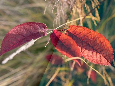 Ocho presets de Lightroom gratis para dar un toque vintage a tus fotografías del otoño