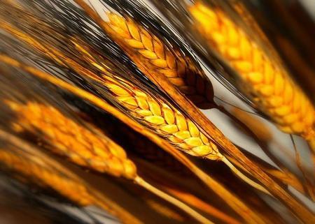 Vivir sin gluten: Día Nacional del Celíaco