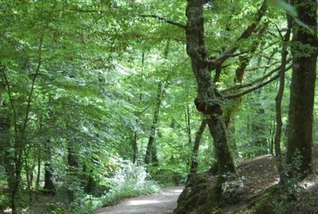 Revive la leyenda del rey Arturo en el bosque de Brocelianda