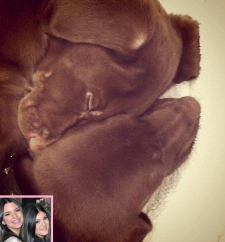 Los nuevos perritos del klan kardashian se llaman Louis y Vuitton. ¿Es una broma no?