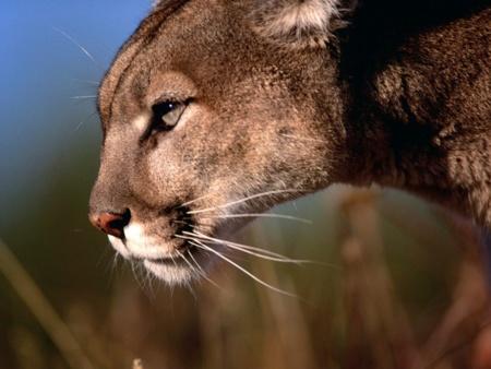 Mountain Lion parece ser todo un éxito tras 48 horas desde su lanzamiento