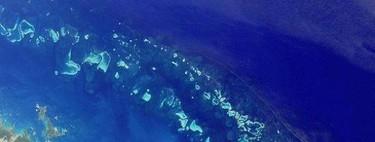 Diez poderosos motivos para conocer la Gran Barrera de Coral (seas submarinista o no)