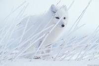 Descubriendo fotógrafos: Paul Nicklen