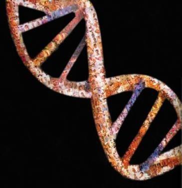 Algunos ejemplos de epigenética: el ambiente modifica nuestro ADN