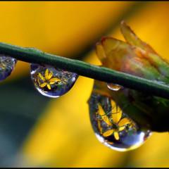 Foto 13 de 25 de la galería la-belleza-de-una-gota-de-agua en Xataka Foto