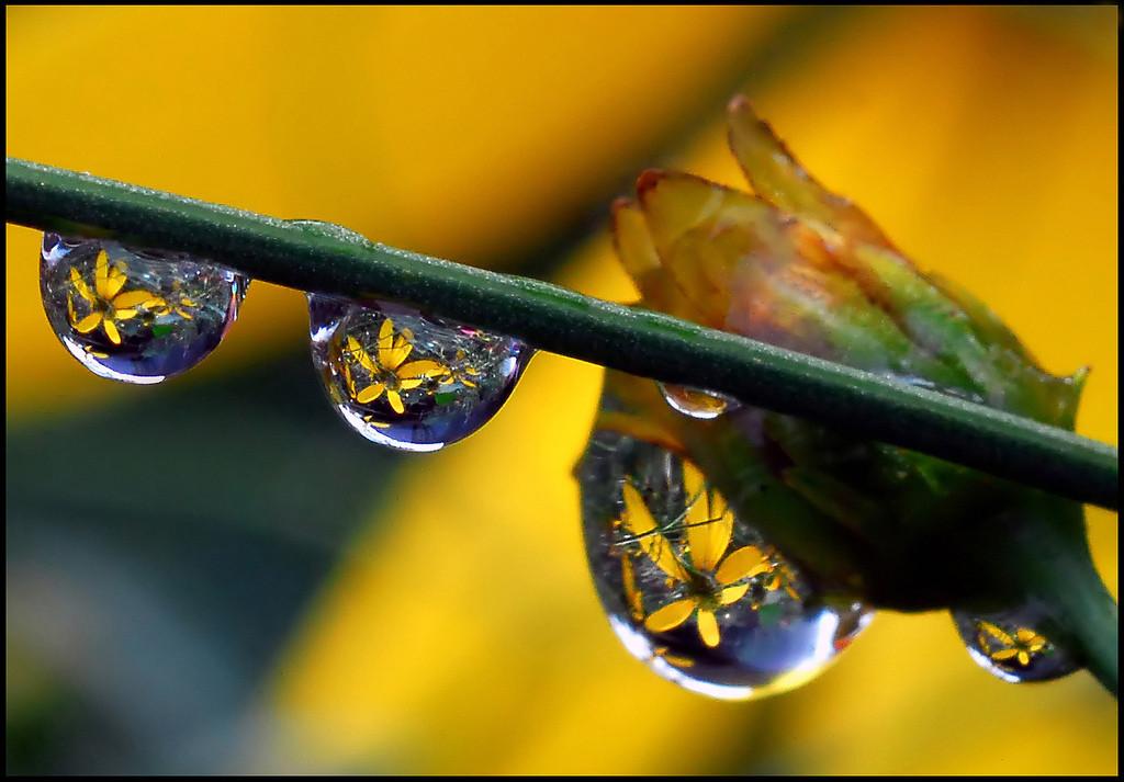 Foto de La belleza de una gota de agua (13/25)
