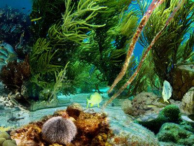 Seak la App Colombiana que te permite conocer el fondo del mar