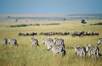 Los 10 mejores destinos para ver vida salvaje en Africa (I)