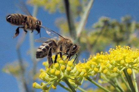 El cliente abeja: con la web como aguijón