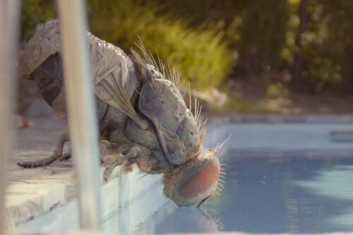 Sitges 2020: 'Mandibules'. Quentin Dupieux firma su película más brillante y accesible bajo la forma de una buddy movie para enmarcar