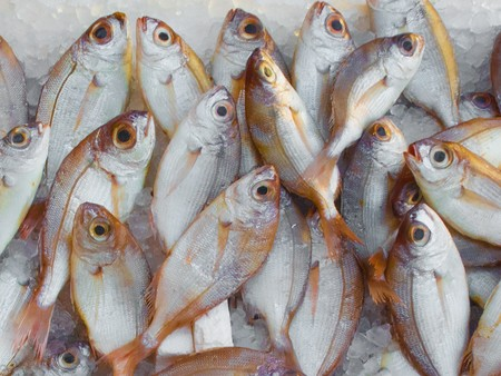 Catch Fish Fish Market 229789 1