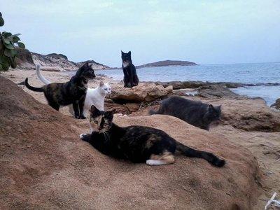 Su Pallosu, la playa de la Cerdeña habitada por gatos