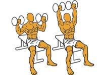 Guía para principiantes  (XX): Press de hombros sentado con mancuernas